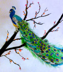 Peacock with Plum Blossoms - Updated by puffugu