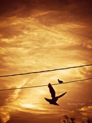 Morning Flight by Elvazur
