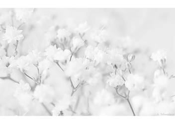 Purity by Limaria