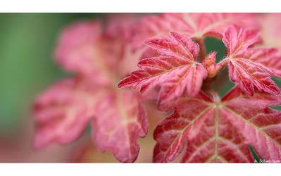 Autumn Colours by Limaria
