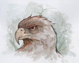 Hawk head by bms-DA