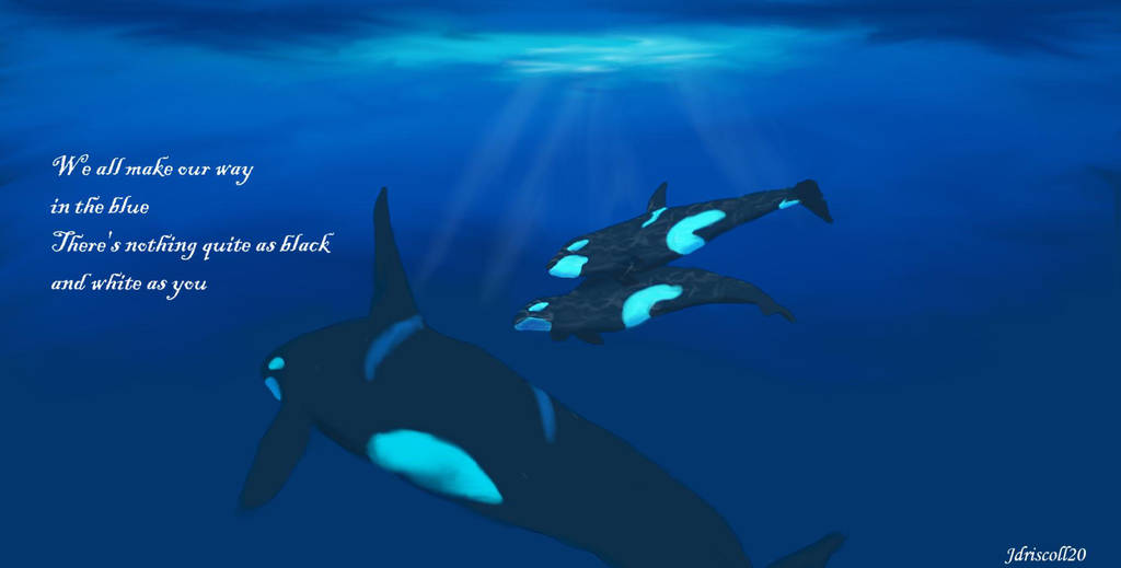 Orca pod by Jdriscoll20