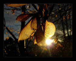 Golden Autumn by Janorien