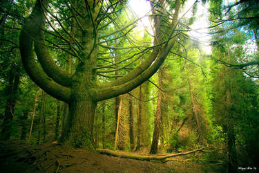 The Seventh Tree by jadden