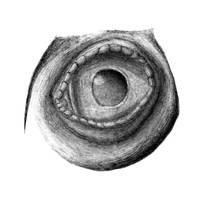 Theropod Eye by dracontes