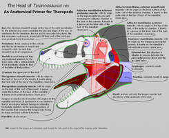 Head of Tyrannosaurus - Anatomy Primer by dracontes