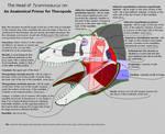 Head of Tyrannosaurus - Anatomy Primer by dracontes