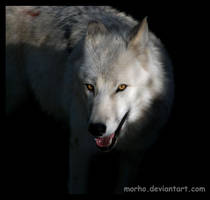 beast with shining eyes by morho