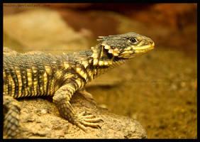 lizard by morho