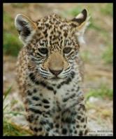 shy cub by morho