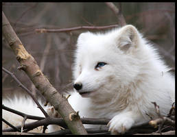white beauty by morho
