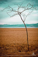 TREE by ConstantineEmer