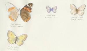 Flutterbys by maxwell-heza