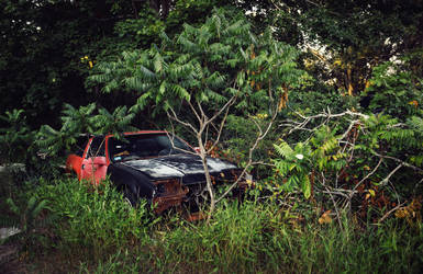wild Honda hiding in the bushes by svoigt