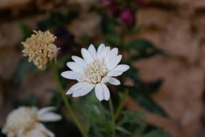 White Bright by Nattgew