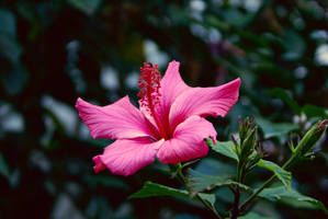 Pink Flowerup by Nattgew