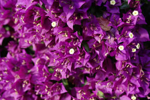 Straight Purple by Nattgew