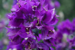 Purple Power by Nattgew