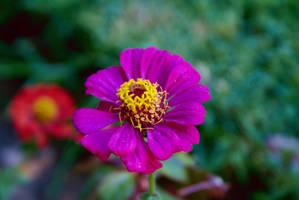 Purplish Flower by Nattgew