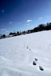 Frozen Lake Trek by Nattgew