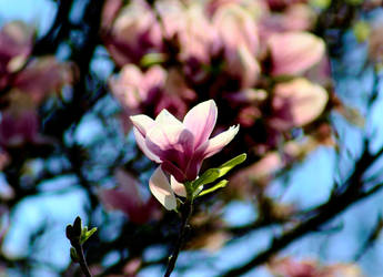 Flower Tree by Nattgew