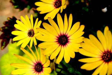 Yellow Flowers by Nattgew