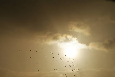 birds in sky by heyla-stock
