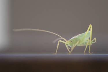grashopper by heyla-stock