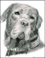Dog portrait by selderaya