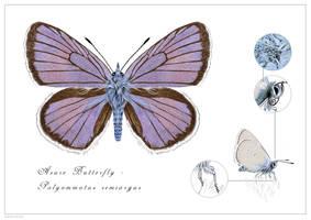 Mazarine Blue Butterfly - Polyommatus semiargus by rainytown