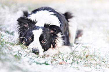 Winter portrait by alicjaphoto