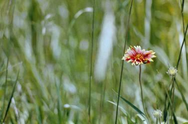In a Meadow of Dull by daniellerohn