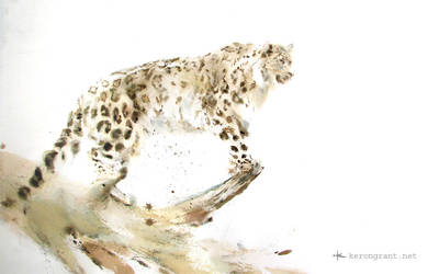 Snow Leopard by Kerong