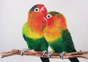 love birds by stephenkbrownart