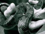 Snake by wavingelephant