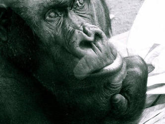 Gorillas make me sad by wavingelephant