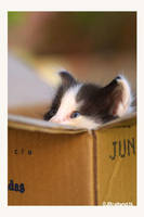 Kitty in a Box by arwenita