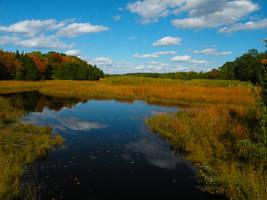 A Wondrous Marsh 2 by fluidcuriosity