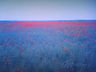 poppy by matthey
