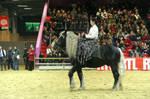 Horse show 01 by DameTenebra