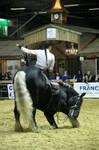 Horse show 03 by DameTenebra