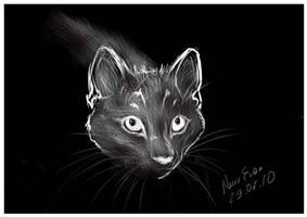 Cat by NaurEvan