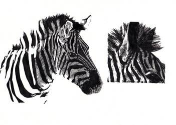 Zebre by specialneeds0468