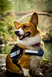 The Service dog. by FurBabyPhotography