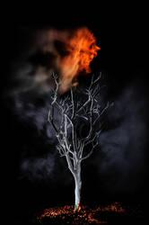 Natures Scream by DarrenBailey