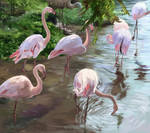 Flamingos- Study Painting by SolidTurtle1