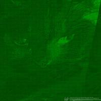 datagrafy: DeviantArt Spezial: Katze by datengraphie