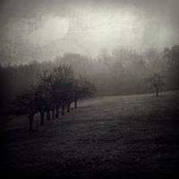 One Foggy day - Row by siamesesam