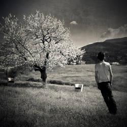 Le Temps Des Noyaux by siamesesam