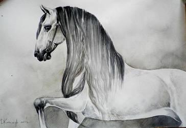 spanish horse by dashket